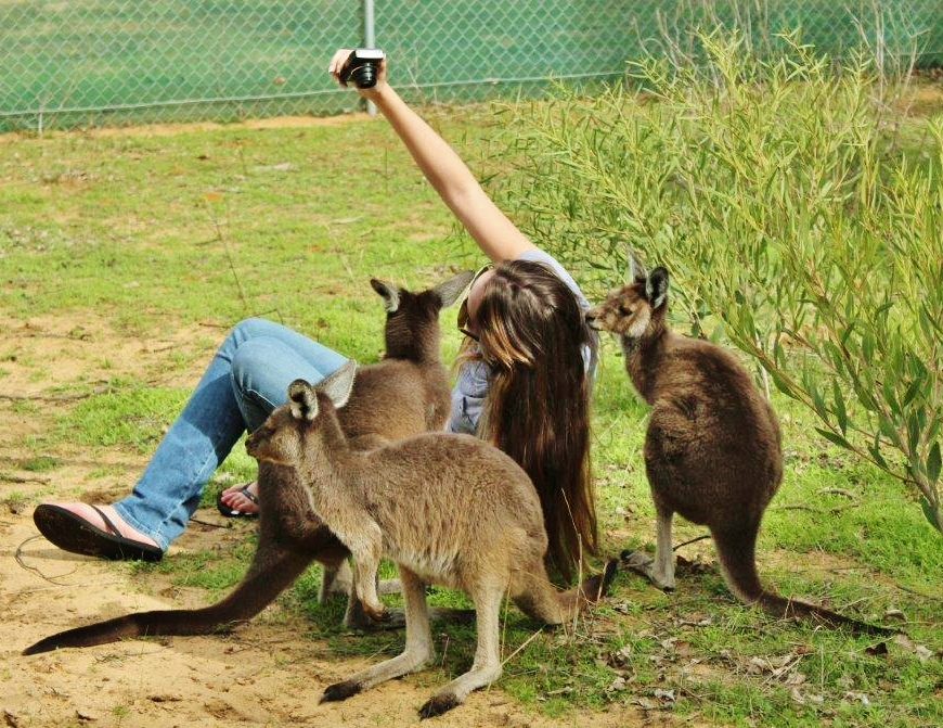 Even the Kangaroo's love a good selfie!