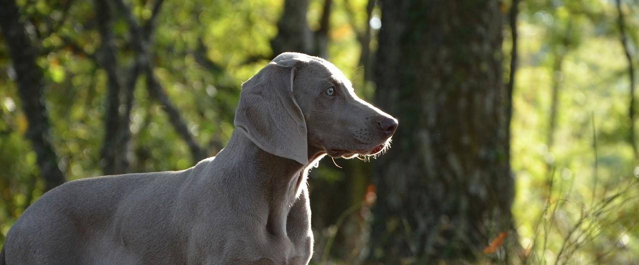 puppy-672229_1280